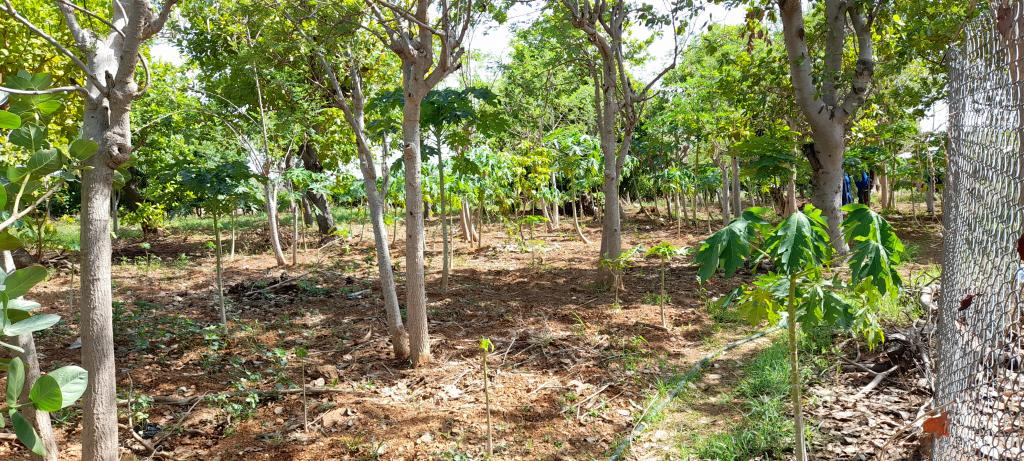 Agroforestry System in Northern Ghana