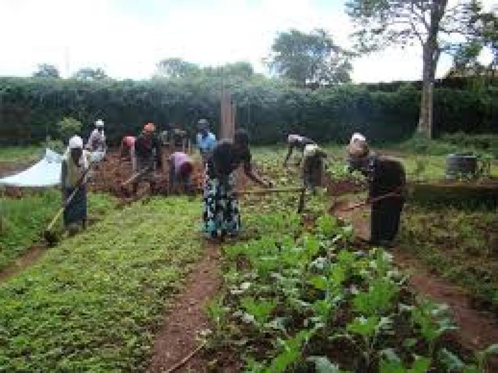 A group of community people  carrying out organic farming to increased healthy food security.