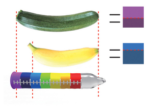 🌈 How to know what size condom you need